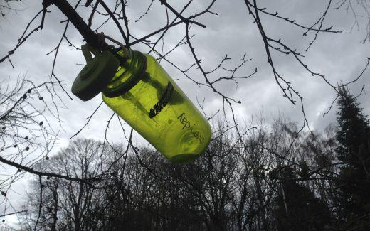 Sådan tapper du birkesaft ved at klippe en gren på birketræet vaerude.dk