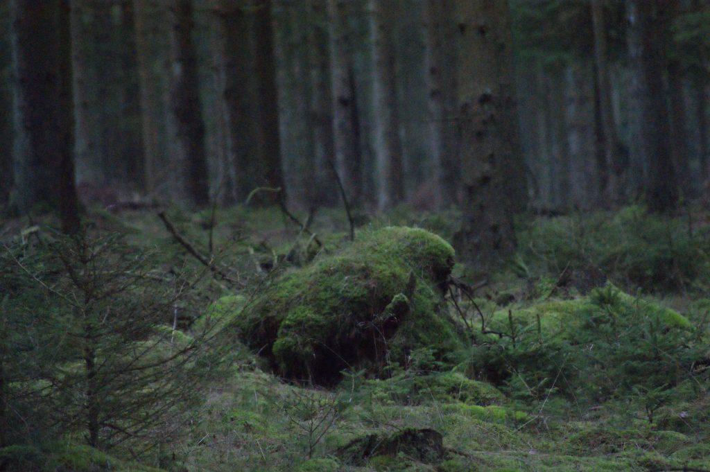 Væsner i naturen vaerude.dk